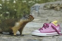 Scoiattolo & scarpa da tennis Immagini Stock Libere da Diritti