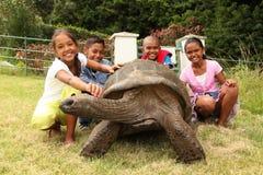 Scolari con il tortoise gigante sulla Sant'Elena Fotografie Stock