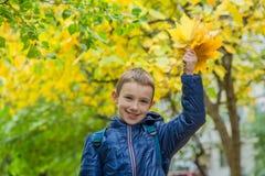 Scolaro con le foglie di acero gialle Immagini Stock