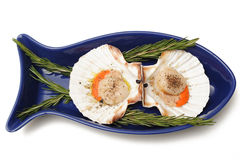 Scollops in a fish shaped bowl. Photograph of scallops in a blue fish shaped bowl,shot in studio and isolated on a white background Stock Photos