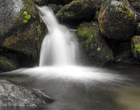 Scolo della primavera, foresta nazionale della sequoia Fotografia Stock Libera da Diritti