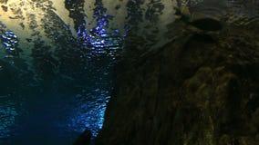 Scomber ist eine Klasse von Ozeanwohnungsmakrelen herein stock footage