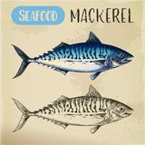 Mackerel hand drawn signboard for fish store. Scombroid mackerel sketch or pelagic fish. Signboard with hand drawn seafood animal. Wildlife for sport fishing Royalty Free Stock Photography