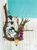 Sconce стены орхидеи ветви дерева стоковые фотографии rf