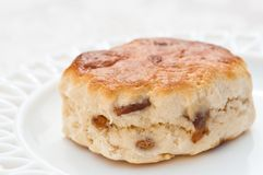 Scone de fruit Image stock