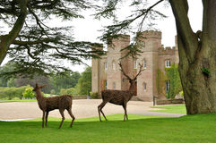 Scone palace. And animals wood Royalty Free Stock Photo