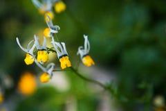 Sconosciuti e fiori di bellezza con il fronte Fotografia Stock Libera da Diritti