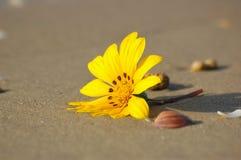 Sconosciuto sulla spiaggia Fotografia Stock Libera da Diritti