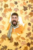 Sconti di autunno sui vestiti Vendita della biancheria intima del ` s degli uomini L'uomo barbuto sta preparando per la vendita d fotografia stock libera da diritti