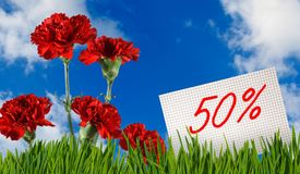 Sconto da vendere, uno sconto di 50 per cento, bello garofano dei fiori nel primo piano dell'erba Fotografia Stock Libera da Diritti