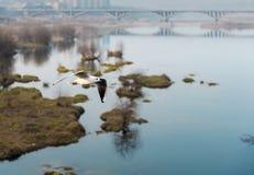 Scontrarsi Shiratori fotografia stock