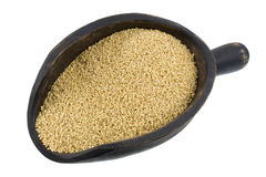Scoop of amaranth grain Royalty Free Stock Photography