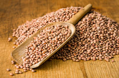 Scoop with brown lentils. Wooden scoop with brown lentils Stock Image