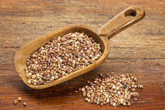 Scoop of buckwheat kasha Royalty Free Stock Photo