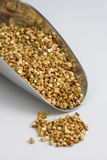 Scoop of buckwheat (kasha), toasted whole grain. A scoop of buckwheat (kasha), toasted whole grain Stock Images