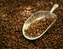 Scoop of coffee beans. Silver scoop of organic coffee beans Royalty Free Stock Photo