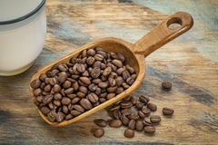 Scoop of coffee beans Stock Images