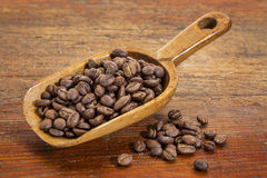 Scoop of coffee beans Stock Photos