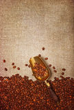Scoop with coffee beans Royalty Free Stock Photo