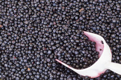 Scoop that collects blueberries. Blueberries for sale at the local market Royalty Free Stock Photo
