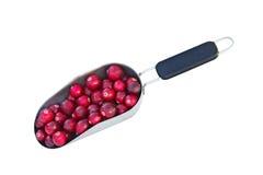 Scoop of Cranberries Stock Photos