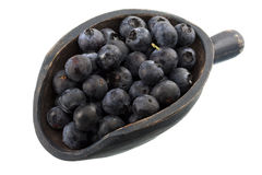 Scoop of fresh blueberries Royalty Free Stock Photography