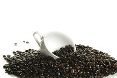 Scoop of fresh coffee beans Royalty Free Stock Photography