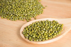 Scoop of green bean seed Royalty Free Stock Images