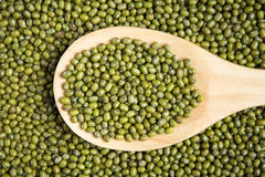 Scoop of green beans seed Stock Image
