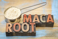 Scoop of maca root powder and typography. Maca root powder on a metal measuring scoop against painted wood and text in vintage letterpress wood type Royalty Free Stock Image