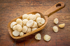 Scoop of macadamia nuts. Macadamia nuts on a rustic, wooden scoop against grunge wood Stock Photo