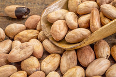 Scoop of raw cacao beans Royalty Free Stock Image