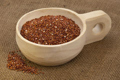 Scoop of red quinoa Stock Image