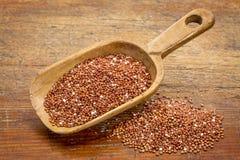 Scoop of red quinoa Royalty Free Stock Photos