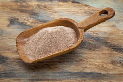Scoop of teff flour. Whole grain teff flour from an ancient North African cereal grass, popular in Ethiopian cuisine - a rustic scoop on wood background Royalty Free Stock Photos