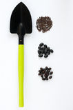 Scoop and three types of black seeds Royalty Free Stock Photos