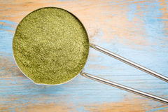 Scoop of  wheat grass powder Royalty Free Stock Image