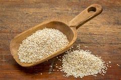 Scoop of white quinoa Stock Images