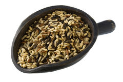 Scoop of wild and brown rice Stock Photo