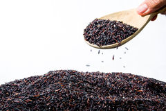 Scooping black rice Royalty Free Stock Images