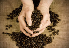 Scooping coffee beans with hands Stock Images