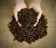 Scooping coffee beans with hands Royalty Free Stock Photography