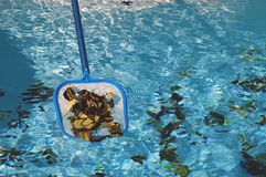 Scooping up Leaves One. Scooping up leaves out of a pool. Horizontal shot royalty free stock photography
