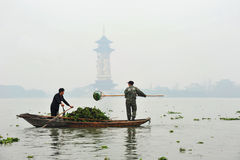Scooping water hyacinth in China Royalty Free Stock Photo