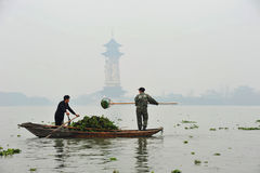 Scooping water hyacinth in China Royalty Free Stock Photos