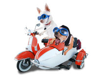 Scooter dogs Stock Images