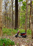 Scooter and Forest Royalty Free Stock Photos