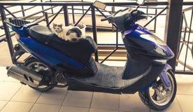 scooter fotografie stock