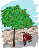 Scooter near an orange tree, vector illustration. Scooter near an orange tree on a background of a stone wall. Hand drawn sketch. Art vector illustration for Stock Photography