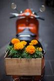 Scooter orange avec les soucis oranges dans la boîte en bois Photos stock